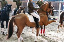 Конный спорт: Кубок губернатора пройдет 12-13 ноября